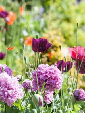 Flowers - ورود
