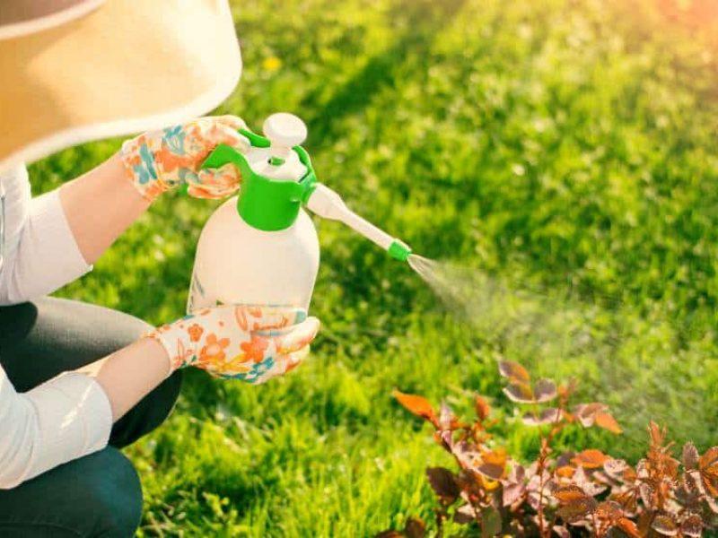 Pest Control & Traps - مبيدات عضويه ومصايد